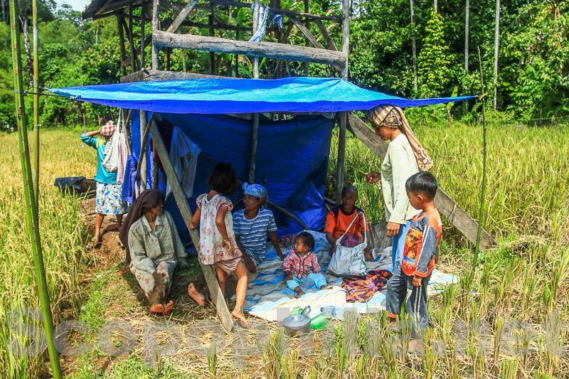 Lubuk Sikaping -  Kab. Pasaman -4277-2