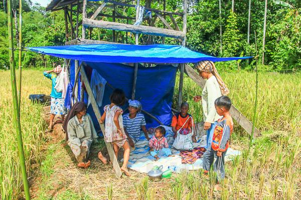Lubuk Sikaping - Kab. Pasaman -4277