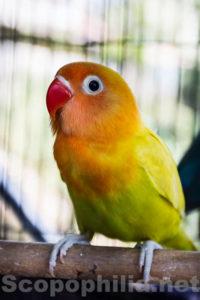 LoveBird-Pasar Burung Malang-8928