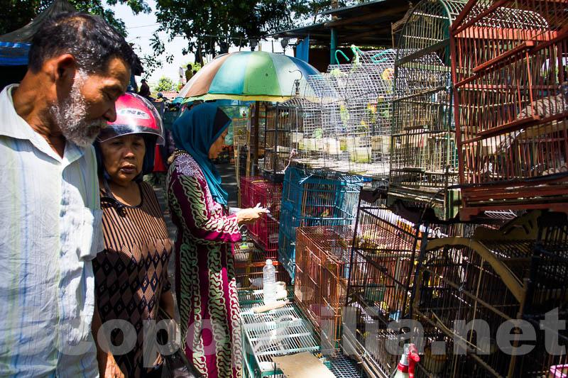 Pasar Burung Malang-8911