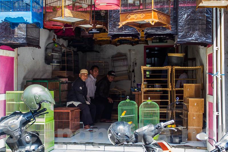 Pasar Burung Malang-8996