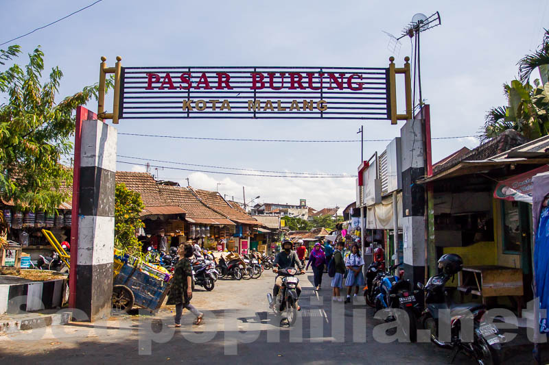 Gerbang Pasar Burung Malang (Pasar Manuk Splindiit)