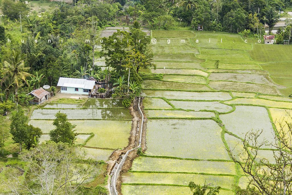 IMG_2607 iew terasering sawah dari panorama Bukit Tinggi